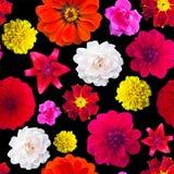 庭院无缝的花纹花样 花纹理 万寿菊, Dahli 图库摄影