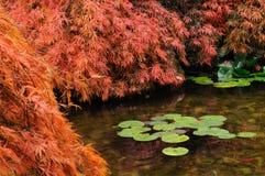 庭院日本人池塘 库存图片