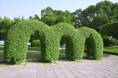 庭院日本人结构树 库存照片
