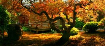 庭院日本人结构树 免版税库存照片