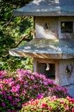 庭院日本人茶 免版税库存照片