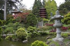 庭院日本人茶 图库摄影