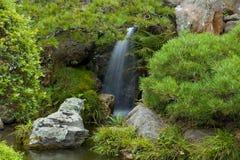 庭院日本茶瀑布 库存图片