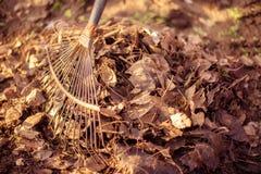 庭院春天清洁:接近会集堆干燥落叶和草的钢犁耙在晴朗的庭院里 免版税库存照片
