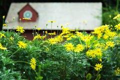 庭院有房子背景 库存图片