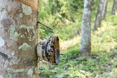 庭院木材在橡胶以后水存贮的早晨  库存图片