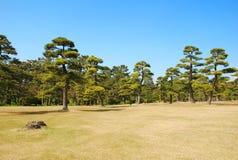 庭院杉木 免版税库存照片