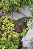 庭院杜松岩石sedums 免版税图库摄影