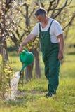 庭院果树园浇灌 免版税库存图片
