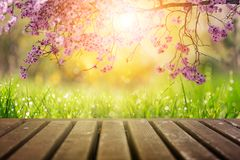 庭院树花在早晨阳光下 免版税库存照片