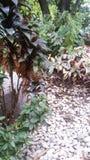 庭院树 免版税库存照片