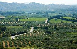 庭院横向典型橄榄色的普罗旺斯 免版税图库摄影