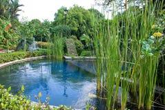 庭院水 免版税库存图片
