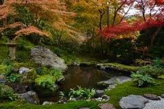 庭院池塘在京都,有豪华的绿色青苔和红色秋天槭树的日本 库存照片