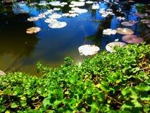 庭院池塘夏天照片 图库摄影