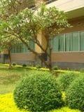 庭院泰国ubonratchatani大学 库存照片