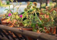 庭院流洒了五颜六色的盆的植物花 免版税库存图片