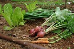 庭院混杂的菜vegtables 免版税库存照片