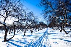 庭院滑雪跟踪冬天 库存照片
