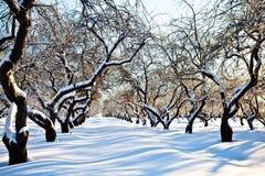 庭院滑雪跟踪冬天 免版税库存图片