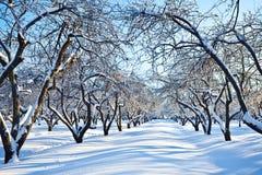 庭院滑雪跟踪冬天 免版税库存照片
