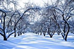 庭院滑雪跟踪冬天 库存图片