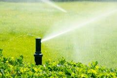 庭院灌溉 库存照片