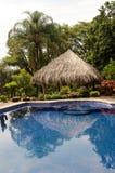 庭院热带池的游泳 免版税库存图片
