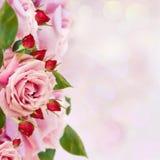 庭院玫瑰边界 免版税库存图片