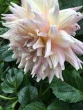 从庭院的可爱的花 免版税库存图片