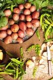从庭院的新近地被开掘的土豆 金属桌用土豆 关闭一个篮子的射击与被收获的potatos的 库存照片