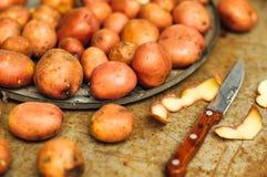从庭院的新近地被开掘的土豆 金属桌用土豆 关闭一个篮子的射击与被收获的potatos的 免版税库存图片