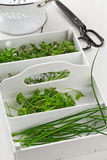 从庭院的新近地被收获的厨房草本 免版税库存照片