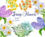 从庭院的春天花 库存图片