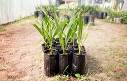 庭院的栽培植物 库存图片