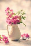 从庭院的玫瑰 库存图片