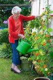 庭院的老妇人浇灌的花厂 免版税库存图片