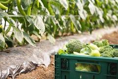 从庭院的菜条板箱 免版税图库摄影