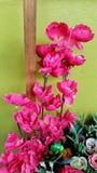 庭院的装饰桃红色花 免版税库存图片