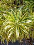 庭院的逗人喜爱的园林植物 库存图片