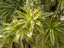 庭院的逗人喜爱的园林植物 免版税库存图片