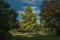 庭院看法爱丽舍大道的与树、草坪和道路在一个晴天在巴黎 免版税库存图片