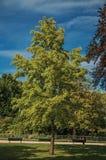 庭院看法爱丽舍大道的与树、草坪和道路在一个晴天在巴黎 库存图片