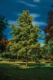 庭院看法爱丽舍有树的和道路的在一个晴天在巴黎 免版税库存照片