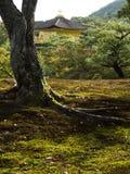 从庭院看见的Kinkakuji金黄亭子 库存图片