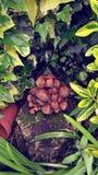 庭院真菌 免版税库存照片