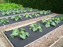 庭院种植 免版税库存照片