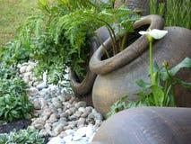 庭院绿色盆 免版税库存照片