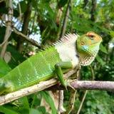 庭院绿蜥蜴 免版税图库摄影
