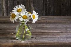 庭院耕种了在一个玻璃瓶的春黄菊花在简单的黑暗的木背景 选择聚焦 在水平 免版税库存图片